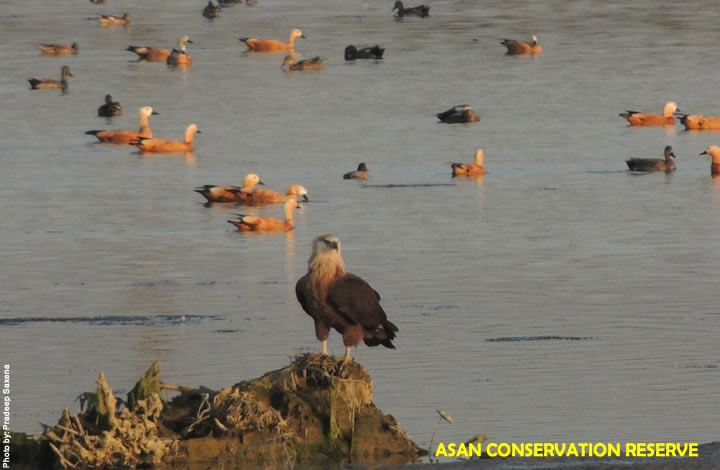 Asan Reserve Bird Watching
