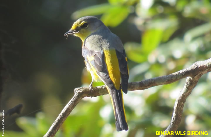 Binsar Wildlife Sanctuary Bird Watching