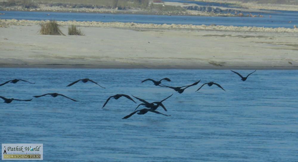 Winter Migration at Jhilmil Jheel Reserve