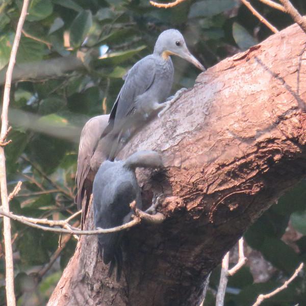Corbett Birding Tour