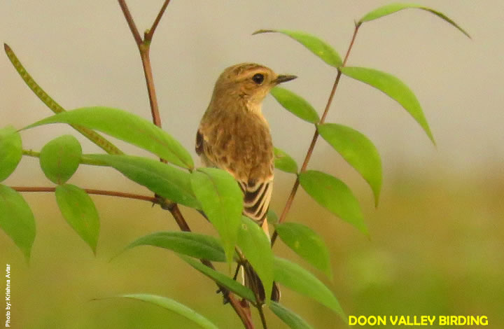 DEHRADUN BIRD WATCHING