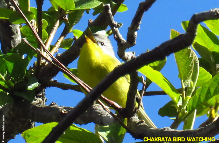 Chakrata Bird Watching