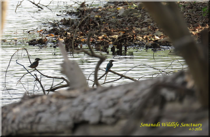 Sonanadi Wildlife Sanctuary Birding