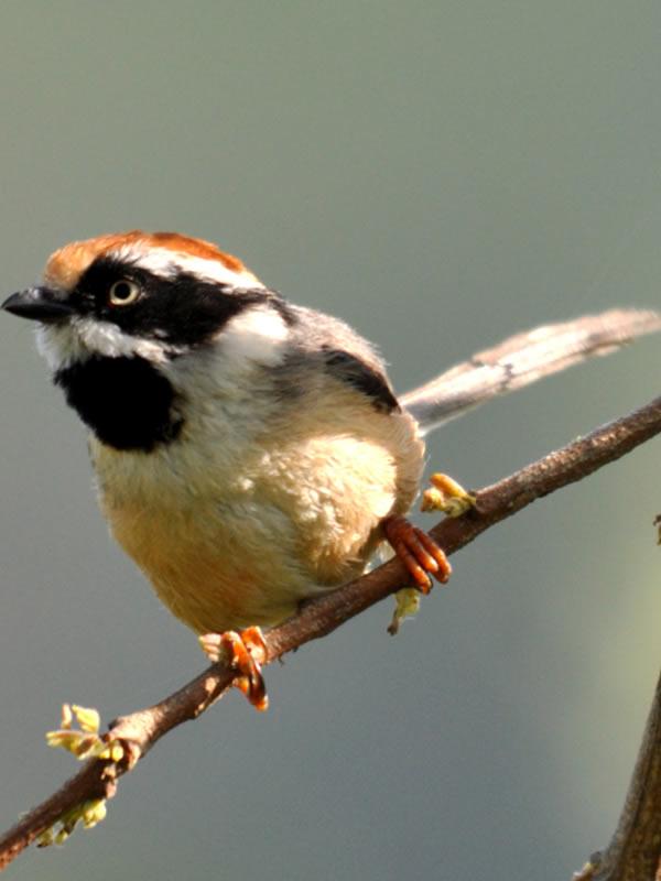 winter-tour-bird1