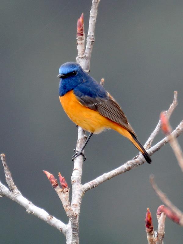 winter-tour-bird2